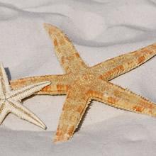 palliatief uitgebeeld in ster symbool